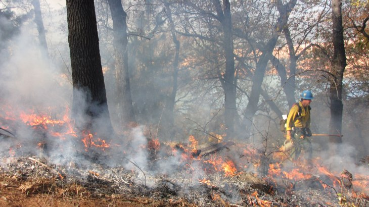 A firefighter works a prescribed burn at the Shasta National Forest.(Molly Samuel/KQED)
